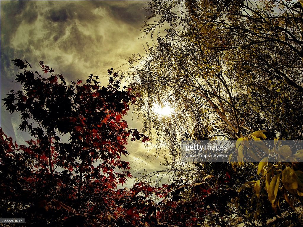 Low Angle View Of Autumn Trees Against Storm Clouds : Foto stock