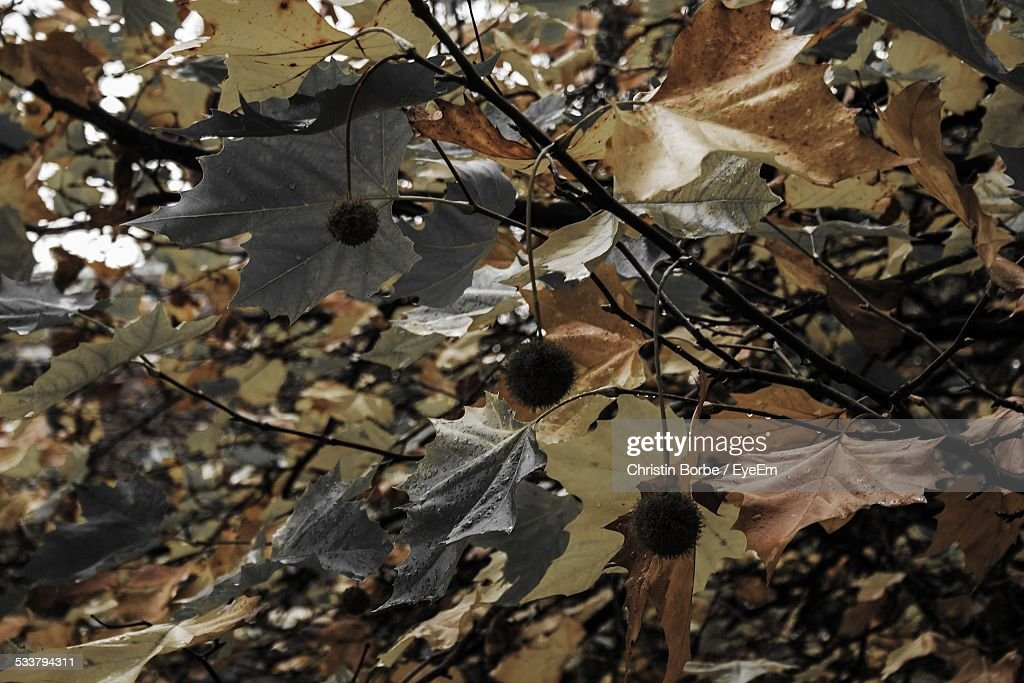 Low Angle View Of Autumn Trees : Foto stock