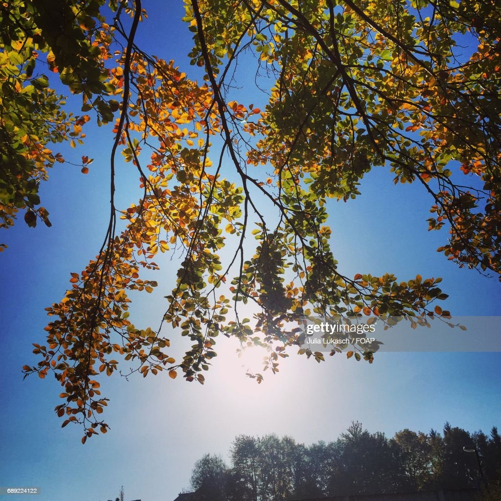 Low angle view of autumn trees : Stock Photo