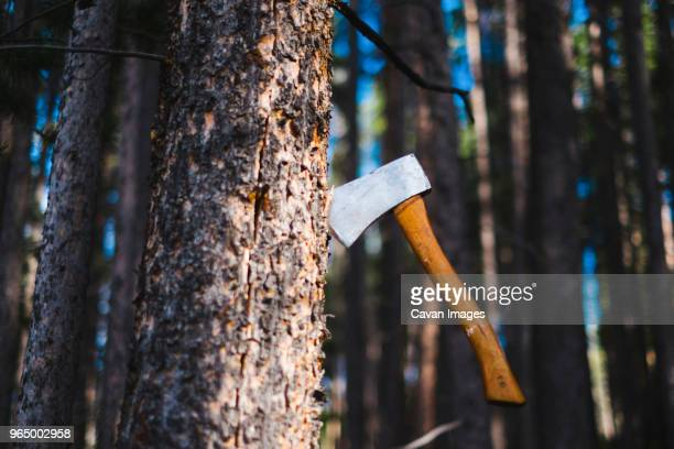 Low angle view of axe in tree trunk