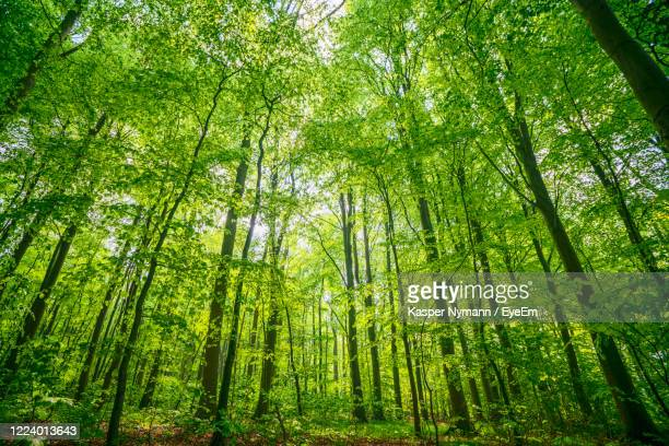 low angle view of bamboo trees in forest - 生い茂る ストックフォトと画像
