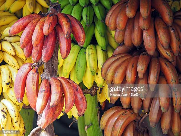 Low Angle View Of Bananas Hanging At Market Stall