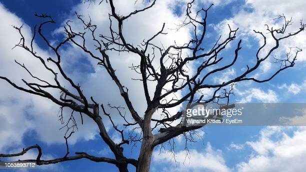 low angle view of bare tree against blue sky - kale boom stockfoto's en -beelden