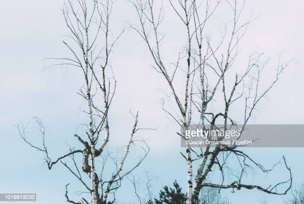 low angle view of bare tree against clear sky - eyeem stock pictures, royalty-free photos & images