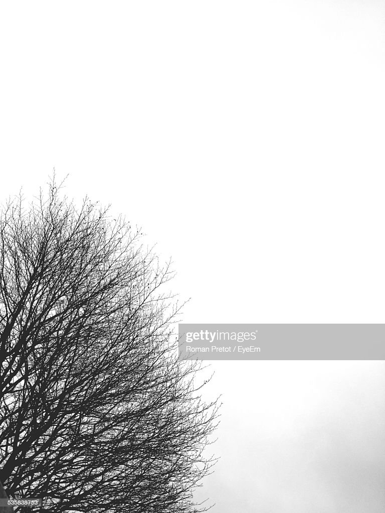 Low Angle View Of Bare Tree Against Clear Sky : Stock-Foto