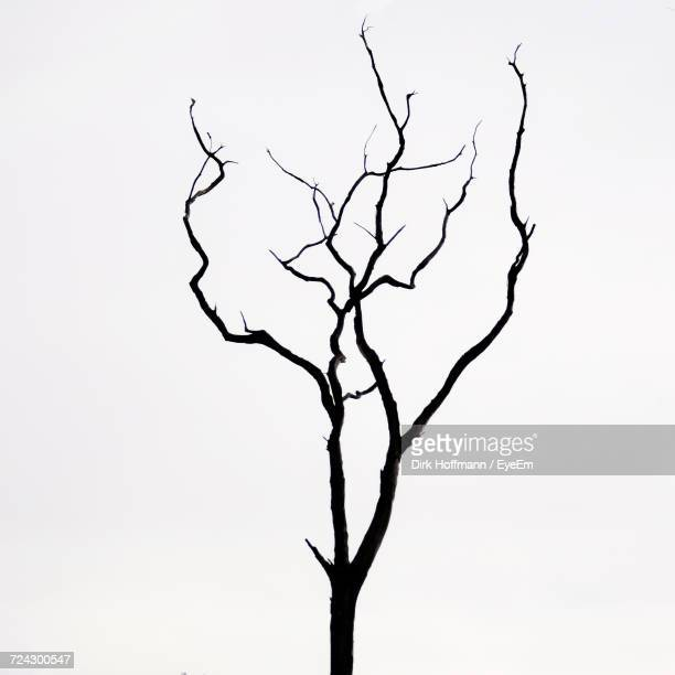 low angle view of bare tree against clear sky - kahler baum stock-fotos und bilder