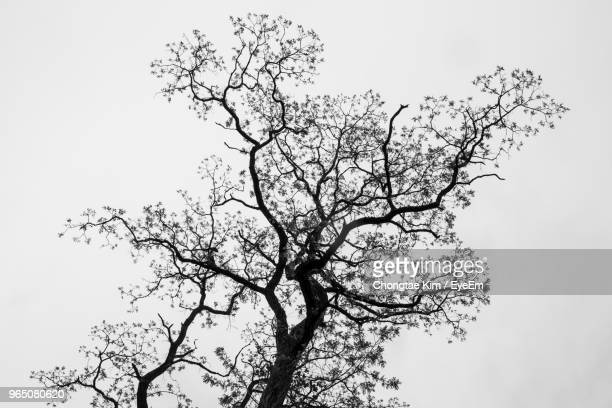 low angle view of bare tree against clear sky - single tree stock pictures, royalty-free photos & images