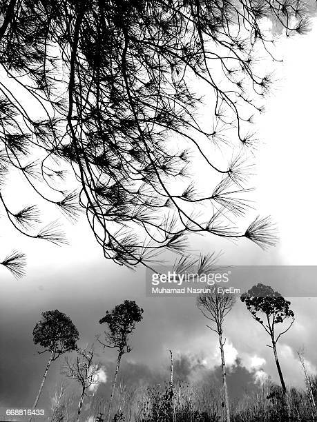 low angle view of bare tree against cloudy sky - muhamad nasrun stock pictures, royalty-free photos & images