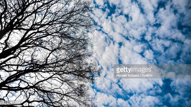 low angle view of bare tree against cloudy sky - ronald kosters eyeem stockfoto's en -beelden