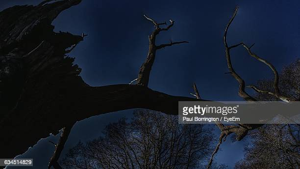 low angle view of bare tree against sky at dusk - ウェルシュプール ストックフォトと画像