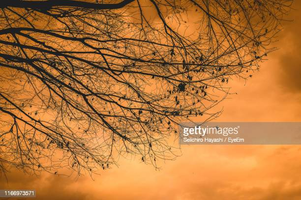 low angle view of bare tree against sky during sunset - seiichiro hayashi ストックフォトと画像