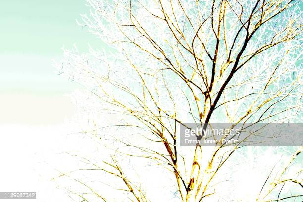 low angle view of bare tree against sky during winter - emma hunter eye em stock photos and pictures