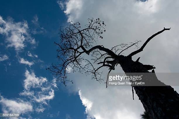 low angle view of bare tree against sky - hong quan stock pictures, royalty-free photos & images