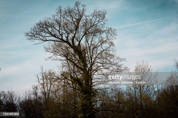 low angle view of bare tree against sky - albrecht schlotter foto e immagini stock