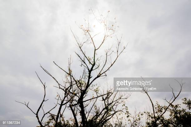low angle view of bare tree against sky - albrecht schlotter stock photos and pictures