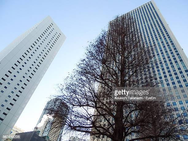 low angle view of bare tree and buildings in city - koukichi ストックフォトと画像