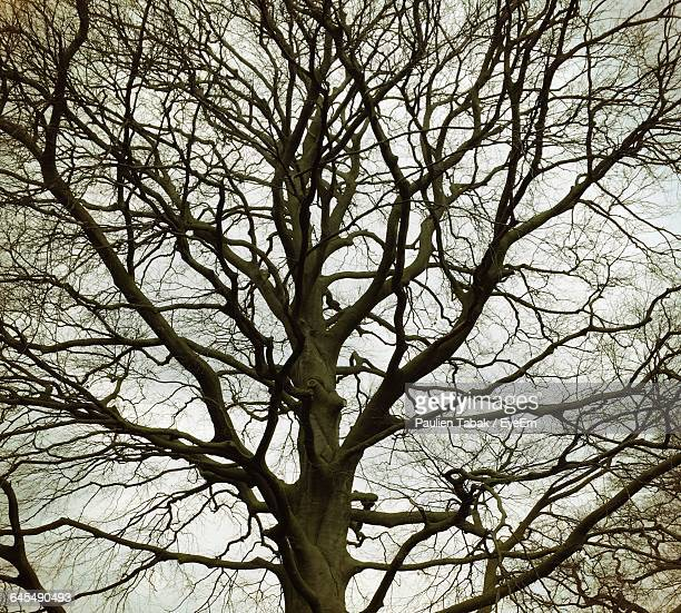 low angle view of bare tree - paulien tabak stock pictures, royalty-free photos & images