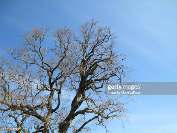 low angle view of bare tree - fauci stock pictures, royalty-free photos & images