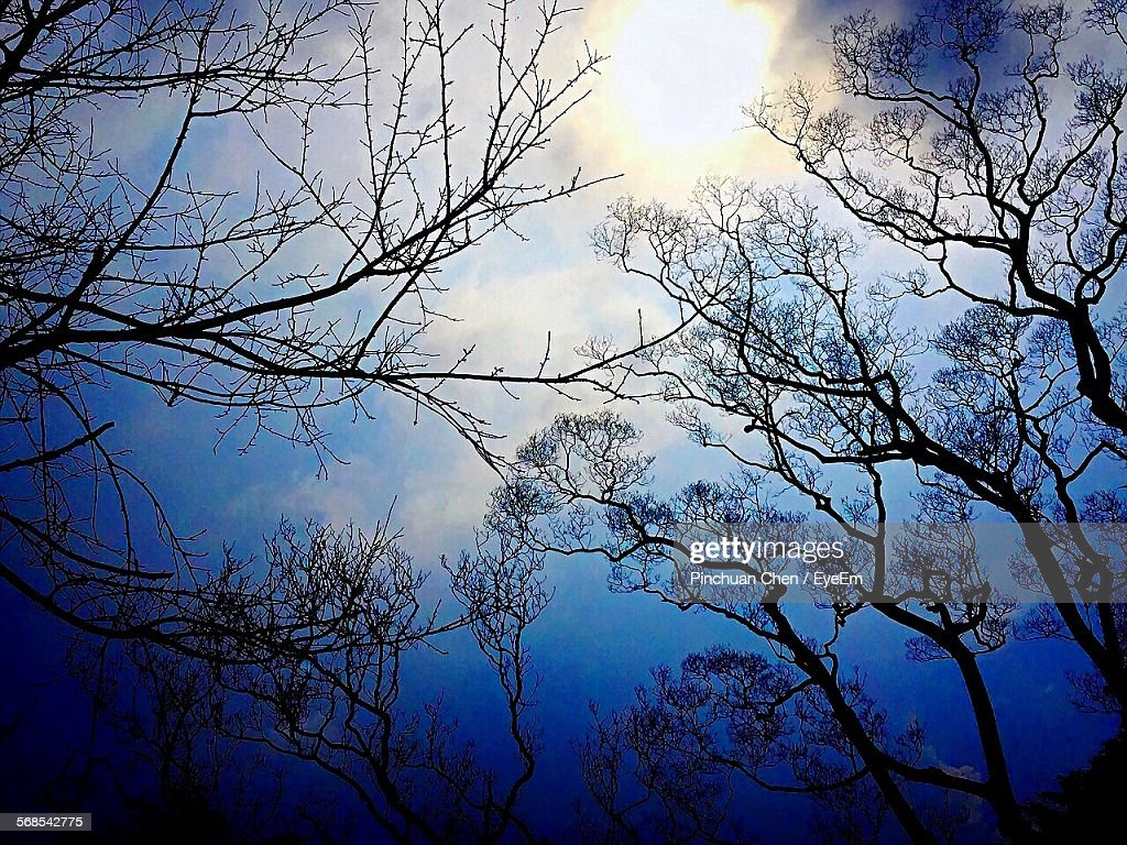Low Angle View Of Bare Trees Against Blue Sky : Stock Photo