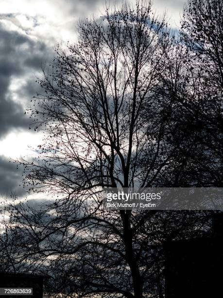 Low Angle View Of Bare Trees Against Cloudy Sky