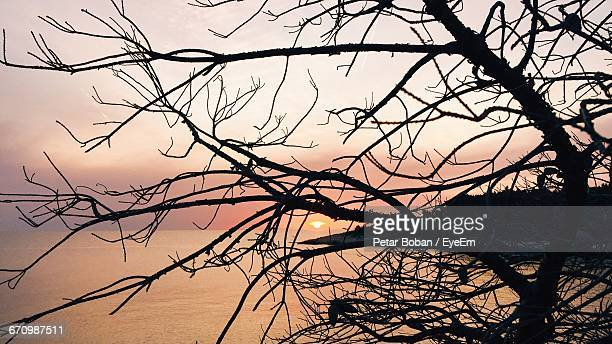 low angle view of bare trees against sky at sunset - boban stock pictures, royalty-free photos & images