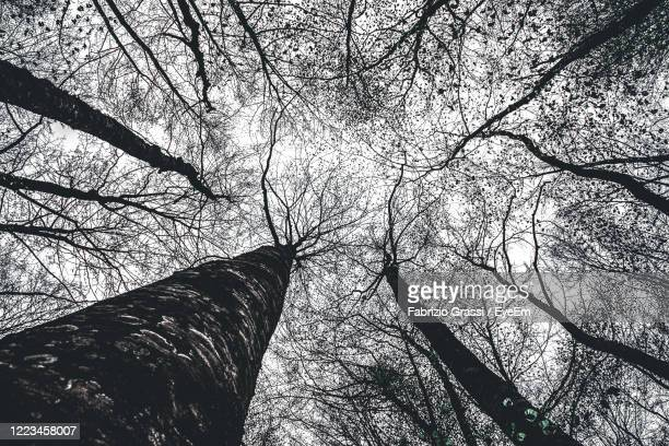 low angle view of bare trees against sky - beautiful bare bottoms stock pictures, royalty-free photos & images