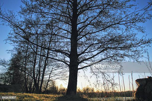 low angle view of bare trees against sky - artur petsey foto e immagini stock