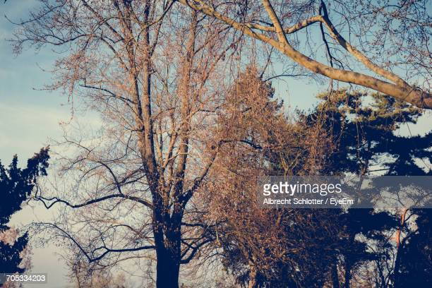 low angle view of bare trees against sky - albrecht schlotter foto e immagini stock