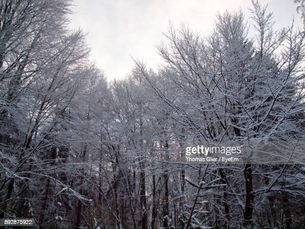 Low Angle View Of Bare Trees In Forest During Winter