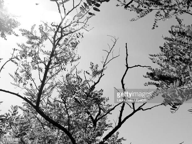 low angle view of bare trees - frau photos et images de collection