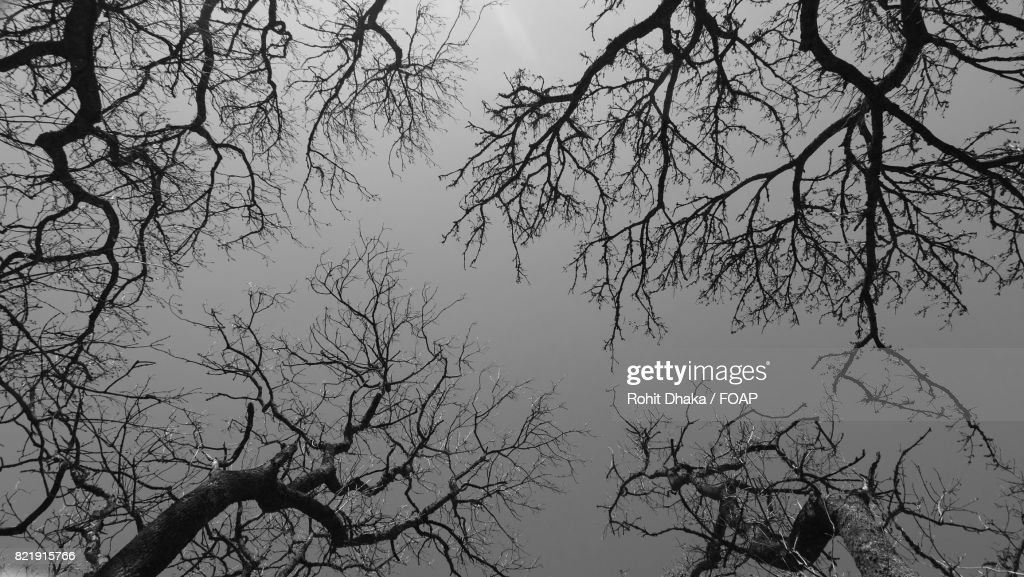 Low angle view of bare trees : Stock Photo