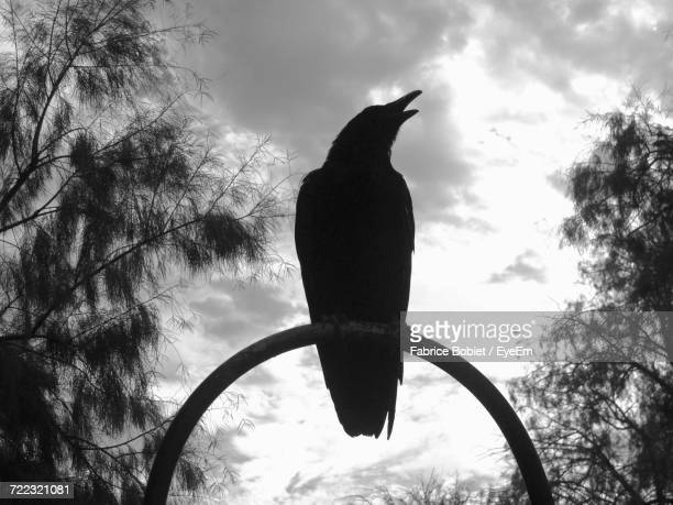 Low Angle View Of Bird Against Cloudy Sky