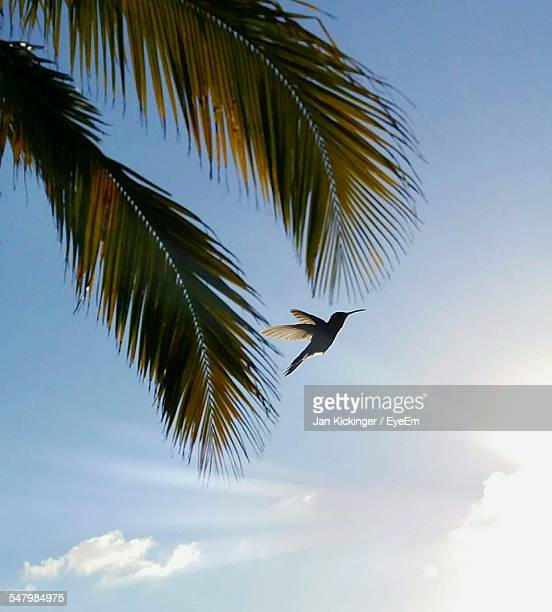 Low Angle View Of Bird And Palm Leaves Against Sky