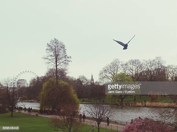 low angle view of bird flying above lake at st james park - st. james' park newcastle upon tyne stock pictures, royalty-free photos & images