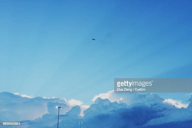 low angle view of bird flying against blue sky - einzelnes tier stock-fotos und bilder