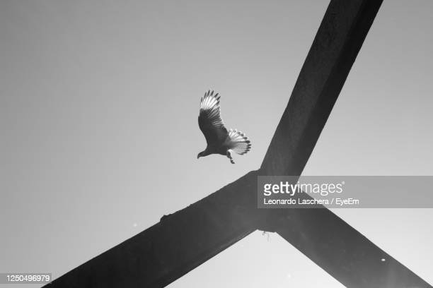 2 062 Black And White Eagle Photos And Premium High Res Pictures Getty Images