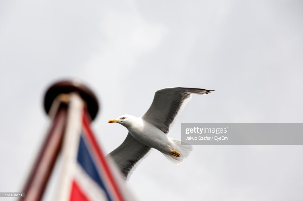 Low Angle View Of Bird Flying Against Clear Sky : Photo