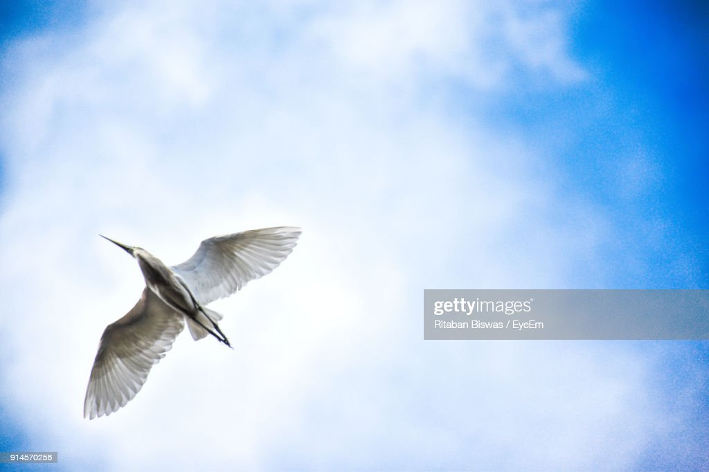 low angle view of bird flying against cloudy sky ストックフォト