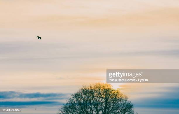 low angle view of bird flying against sky - one animal stock pictures, royalty-free photos & images
