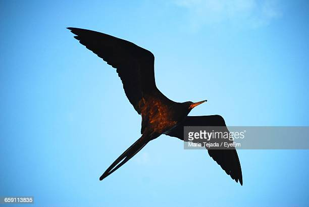 low angle view of bird flying against sky - maria tejada stock pictures, royalty-free photos & images