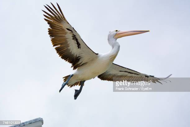 low angle view of bird flying against sky - frank schrader stock pictures, royalty-free photos & images