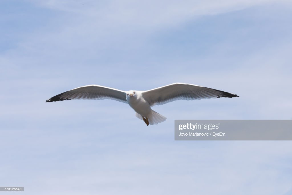 Low Angle View Of Bird Flying Against Sky : Photo