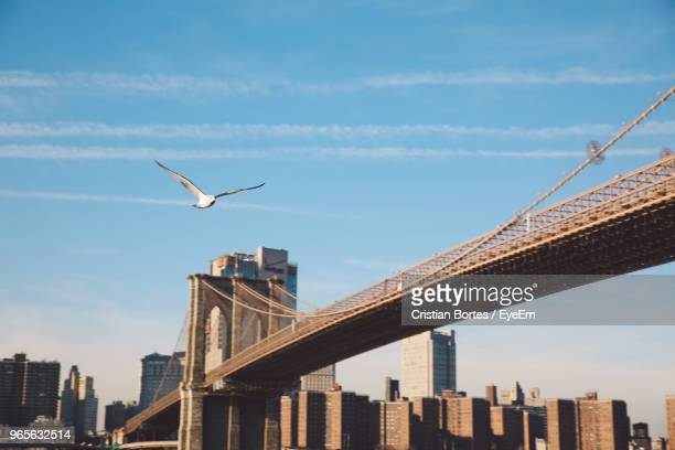 low angle view of bird flying by bridge and cityscape against sky - bortes stock pictures, royalty-free photos & images