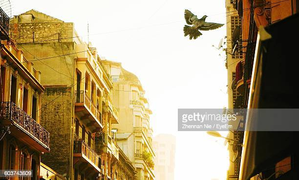Low Angle View Of Bird Flying By Building Against Sky In City