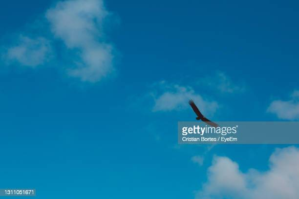 low angle view of bird flying in sky - bortes stock pictures, royalty-free photos & images