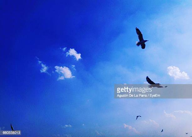 bird flying in blue sky ストックフォトと画像 getty images