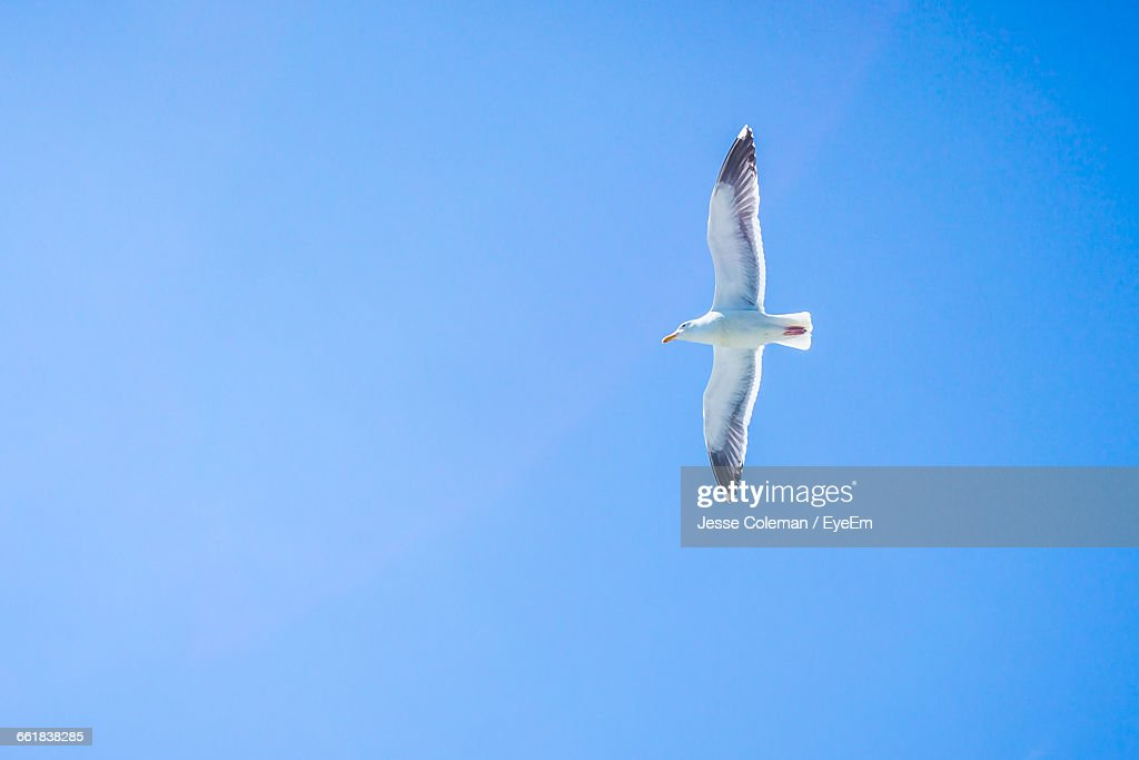 Low Angle View Of Bird Flying In Sky : Stock Photo