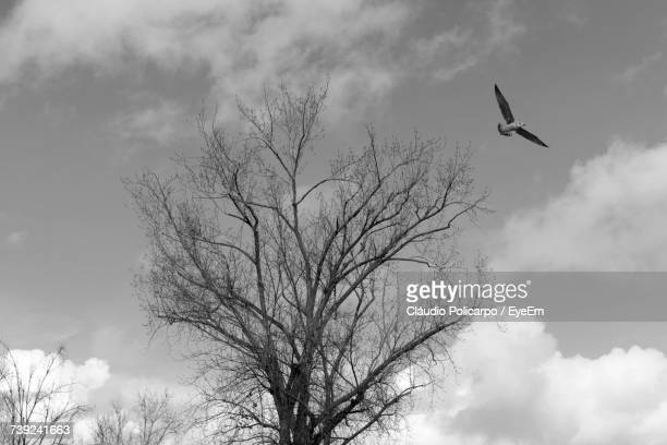 Low Angle View Of Bird Flying Over Bare Tree