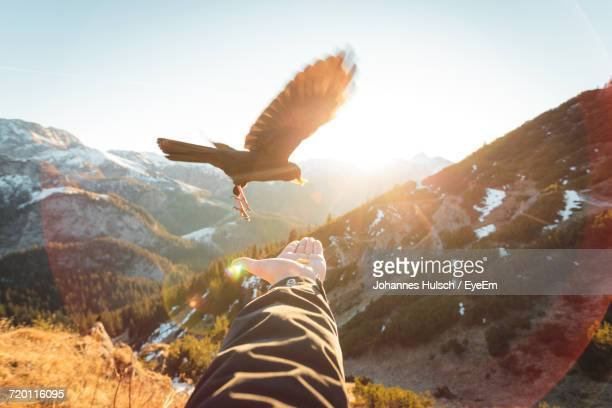 low angle view of bird flying over mountain against sky - spread wings stock pictures, royalty-free photos & images