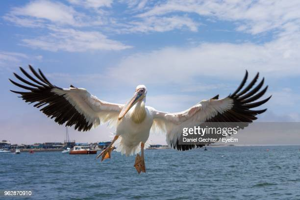 low angle view of bird flying over sea against sky - walvis bay stock photos and pictures